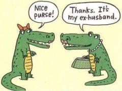 tas krokodil - Amanda's Update